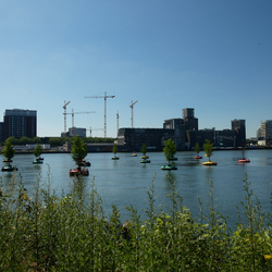 Waterbos  Rijnhaven (1)