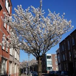 voorjaar in Schiedam