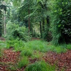 Mooie plekjes in het bos.