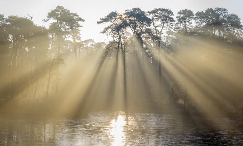 Zonneharpen - Na weken van grauw grijs weer eindelijk weer een keer een mooie zonsopkomst. Het water bevroren, net een vleugje mist om zonneharpen te
