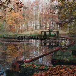 Herfst Waterloopbos