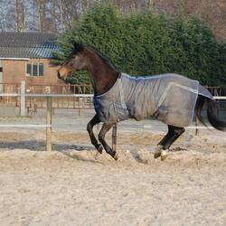 Het zwevende paard