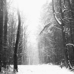 Winter in Limburg 2009