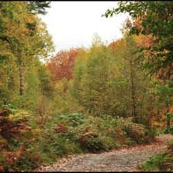 Herfst in Belgie