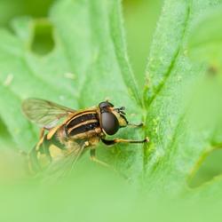 insekt in het groen 4668