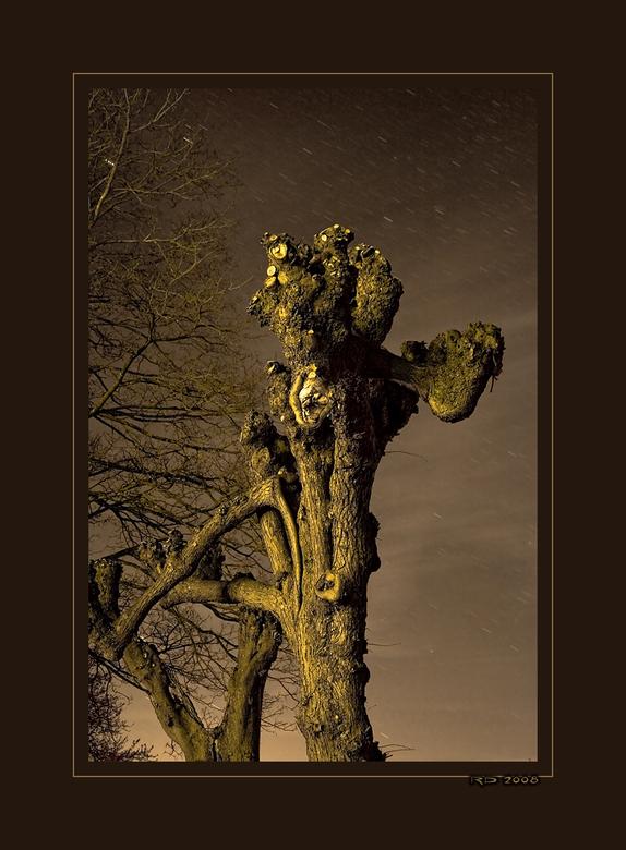 Joshua Tree - Deze HDR is ook bij de Fraeylemaborg te Slochteren genomen. De boom stond werkelijk in de (voor mijn ogen) zwarte nachtelijke uithoek en