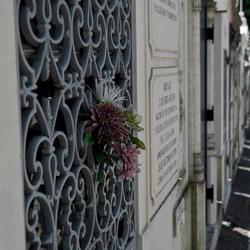 Cemitéro dos Prazeres