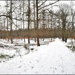 sneeuwpanorama boslandschap