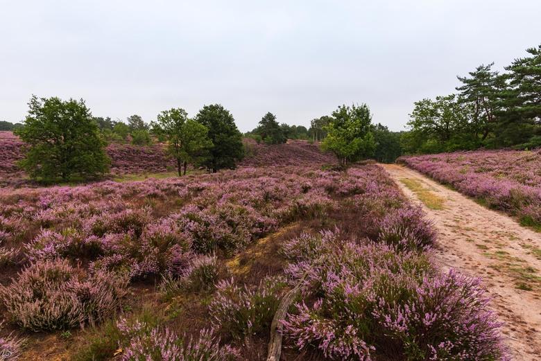 Mechelse Heide -