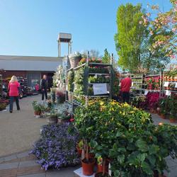 Plantjesmarkt Honselersdijk