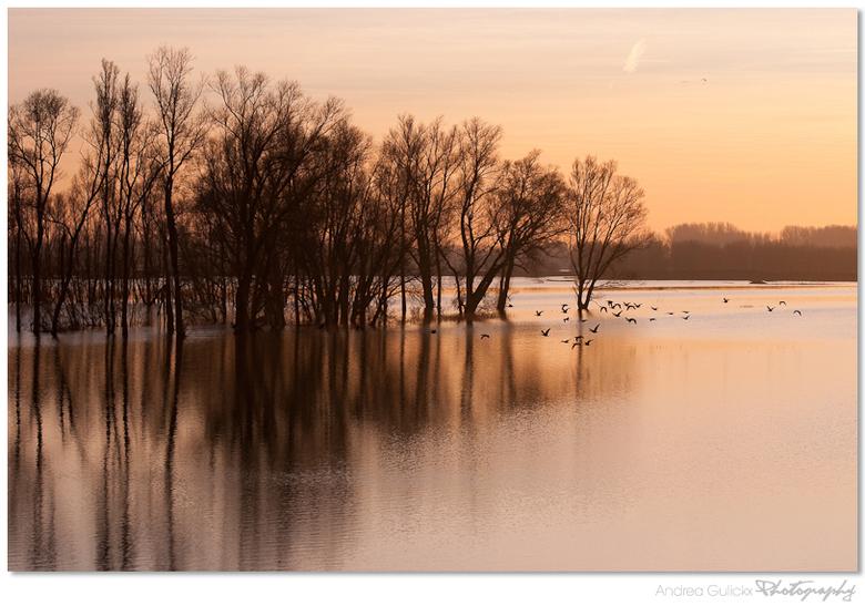Frozen sunset - Het water van de waal is eindelijk weer een stuk gezakt. Op de terugweg voor een opdracht in Hemmen ben ik over de dijk terug gereden