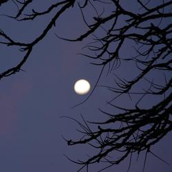 De maan schijnt door de bomen...