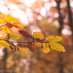 20151030_nva_7514_herfst_autumn-web