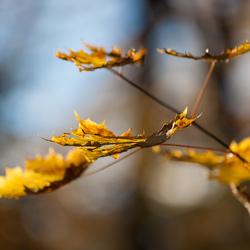 Plataanbladeren 1