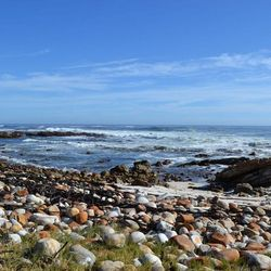 Cape of good hope nature reserve, Zuid Afrika