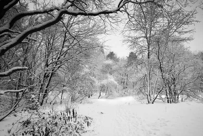 De schoonheid van winter