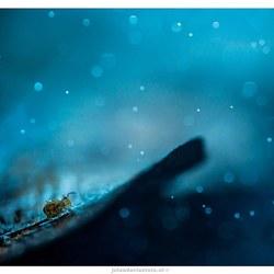 Springstaartje in de regen