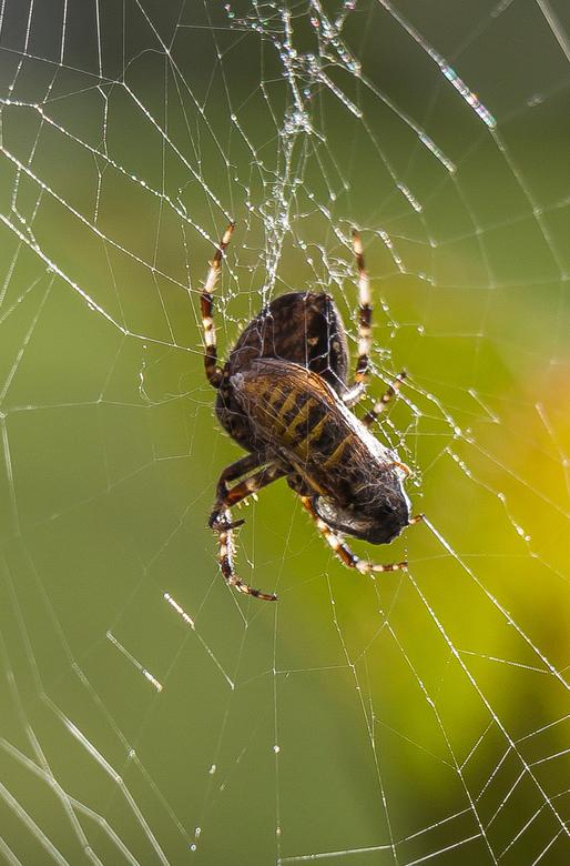 Spinnenmaal 2