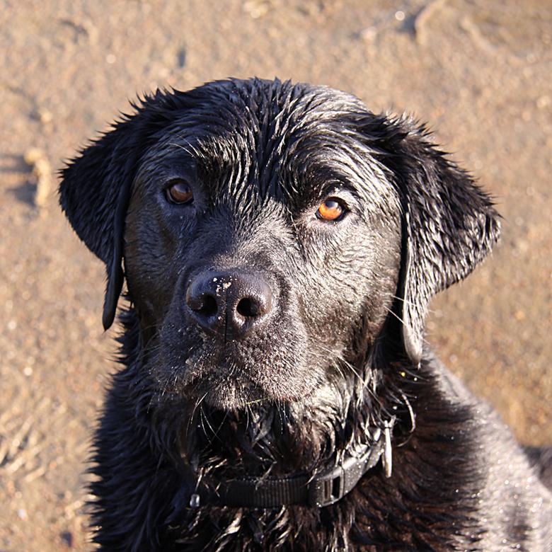 Spike - Vandaag hebben we met de hond bij het Zwaansmeer gelopen.<br /> Het was mooi weer, dus de camera mee. <br />