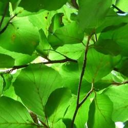 Blad, blader, bladst!