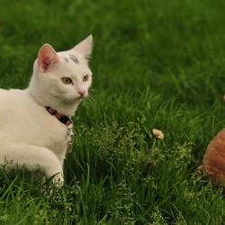 Wat ligt er daar nou in het gras?