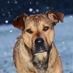 Nolan in de sneeuw
