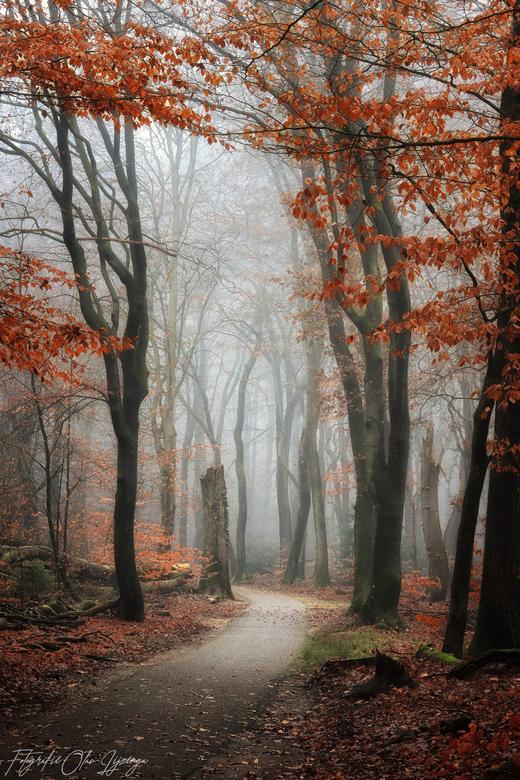 fairy tale -
