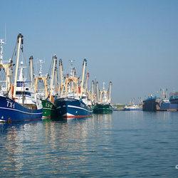 Vissersschepen haven Oudeschild op Texel.