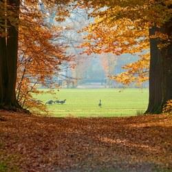 Doorkijkje Schaffelaarse bos
