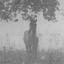 Wild horse in the mist