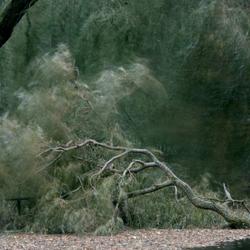 Bomen sneuvelen.