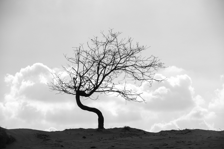 Eenzaam in al haar verlangen - Eenzaam in al haar verlangen....wachtend op een ontluikend groen.