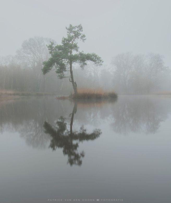 Fog island -