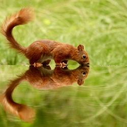 Hello squirrel !