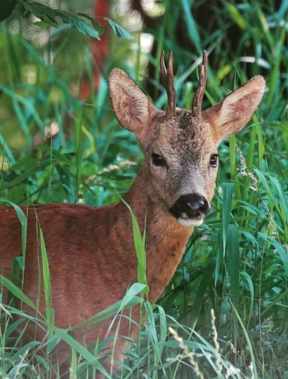Hello dear, ok, sorry, hello deer. -