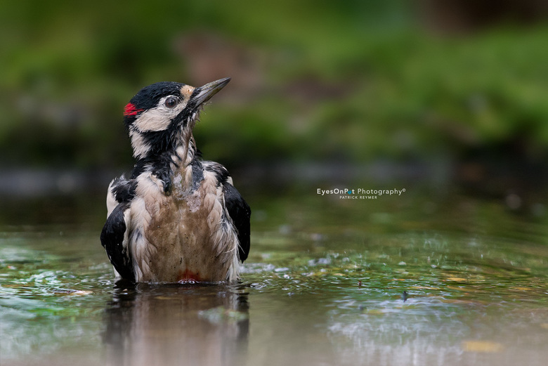 Dirty Woodpecker