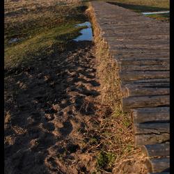 Lentevreugd in Wassenaar