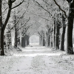 Winter in Staphorst