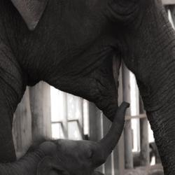 Baby olifant Mumba