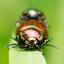 Bugs eyes