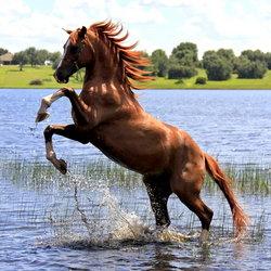 Splashing Horse