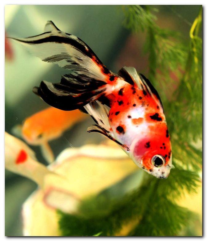 vervolg liedje - Ik begrijp uit de reacties dat jullie het liedje over de goudvis leuk vinden. Hierbij het vervolg:<br /> <br /> &quot;Hij kronkelde