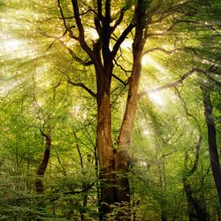HDR van een zomerse boom
