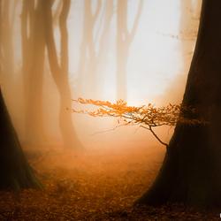 Zon,mist en een mooi bos...