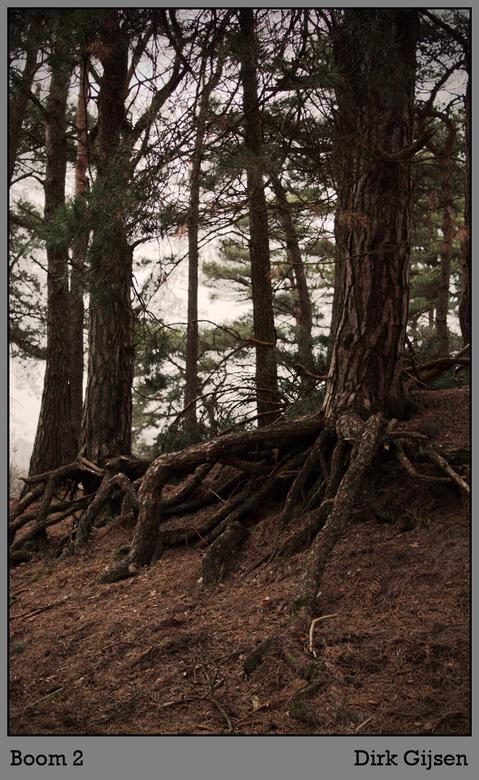 waterwegen - hele bijzondere boom zo met die wortels zo. Leuke afsluiting van deze reeks.