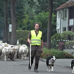 Herder in de straat
