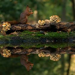 Herfst bij de eekhoorns