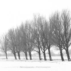 Winterlijnen.