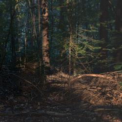 Eerste zonlicht in het bos .2
