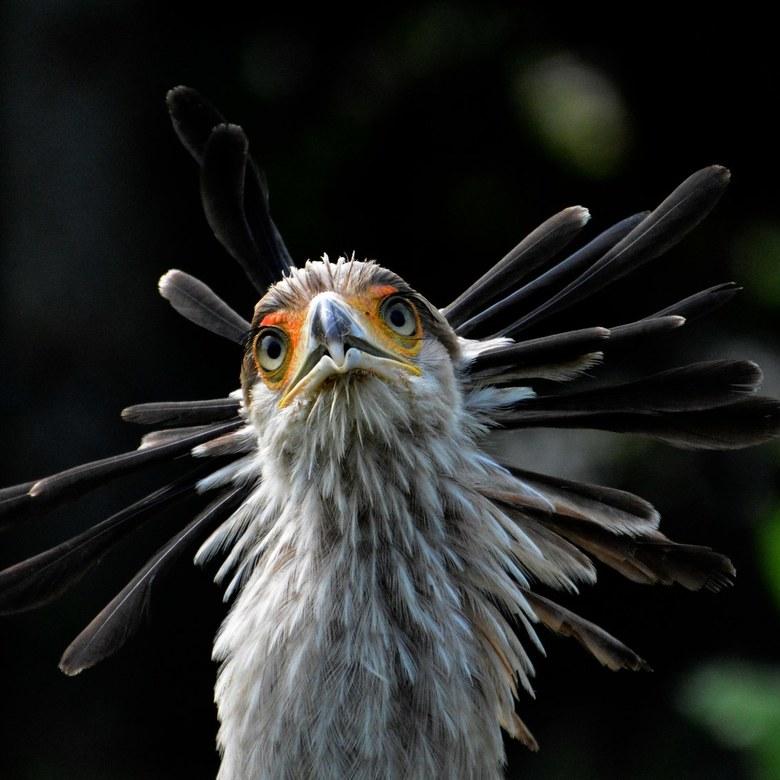 Maar wat is het voor vogel. ......? -